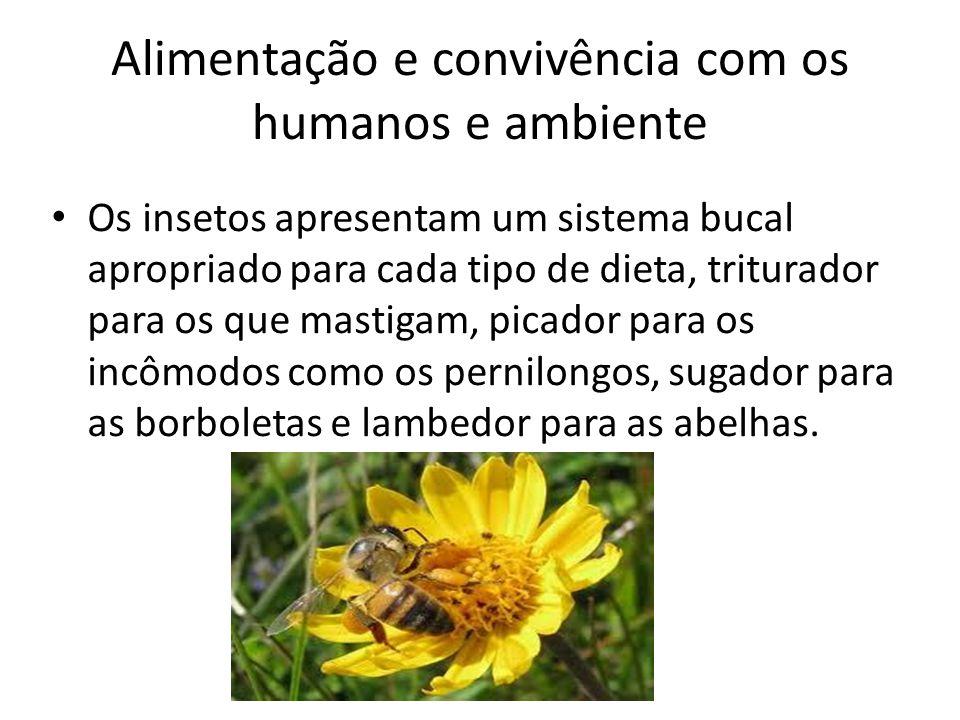 Alimentação e convivência com os humanos e ambiente Os insetos apresentam um sistema bucal apropriado para cada tipo de dieta, triturador para os que