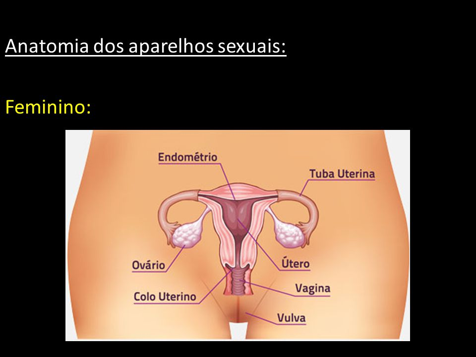 Anatomia dos aparelhos sexuais: Feminino:
