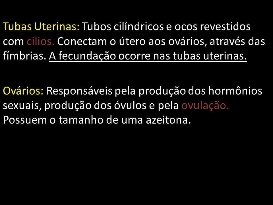 Tubas Uterinas: Tubos cilíndricos e ocos revestidos com cílios.