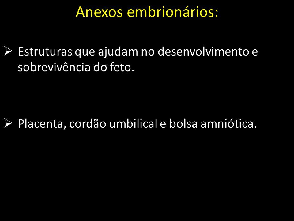 Anexos embrionários: Estruturas que ajudam no desenvolvimento e sobrevivência do feto.