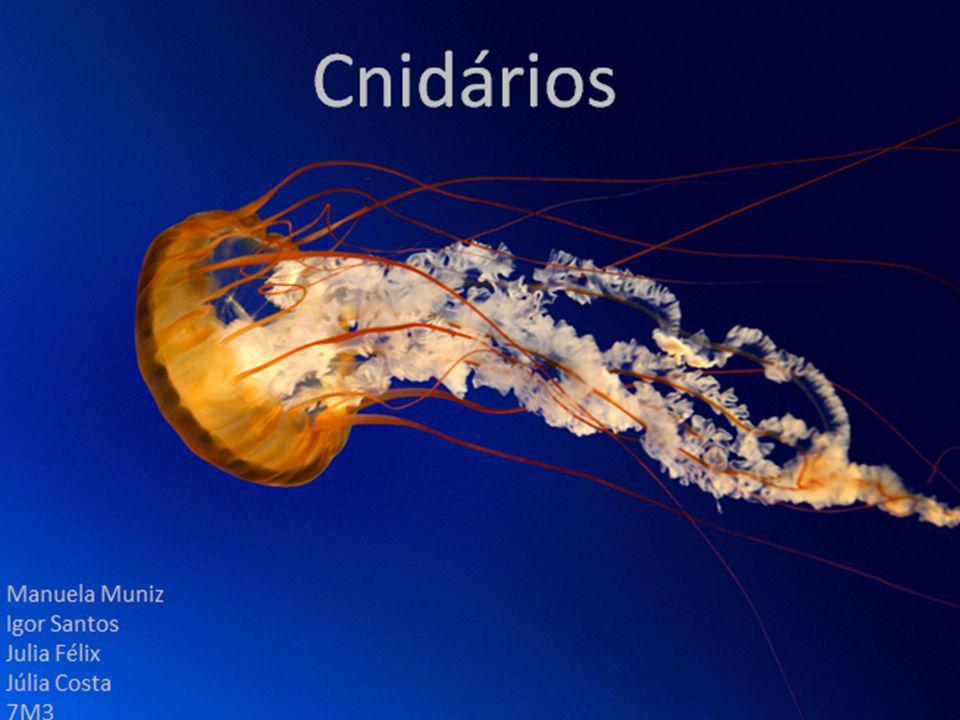 Cnidaria (do grego knidos, e do latim aria) Filo de animais aquáticos Popularmente conhecidos como celenterados ou cnidários Principais representantes: as hidras de água doce, medusas, alforrecas ou águas vivas.