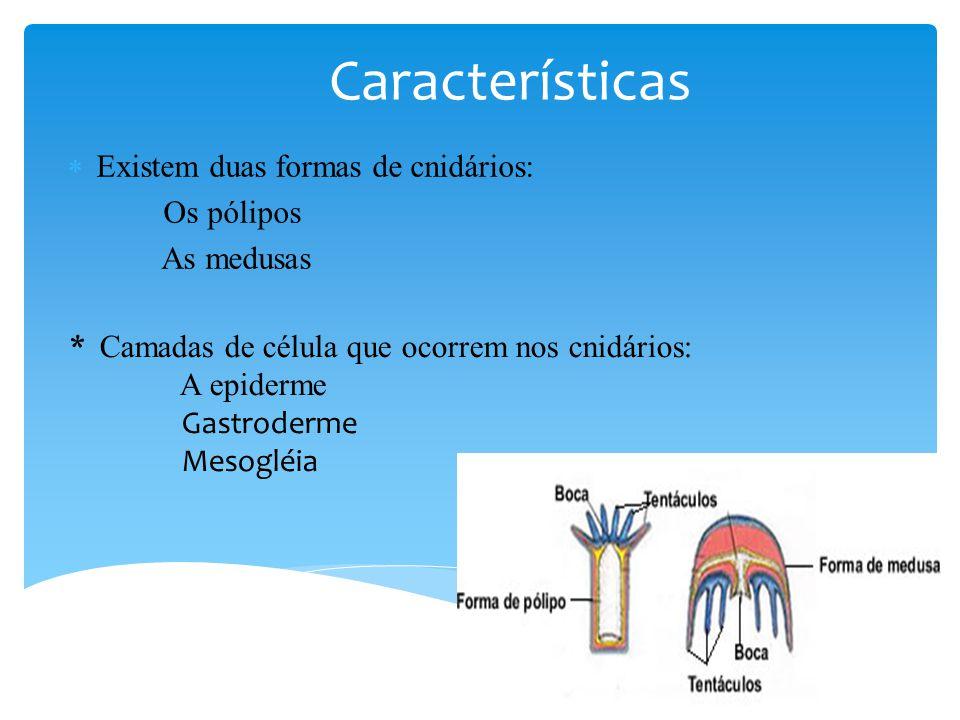 Existem duas formas de cnidários: Os pólipos As medusas Características * Camadas de célula que ocorrem nos cnidários: A epiderme Gastroderme Mesogléia