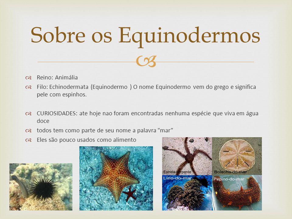Reino: Animália Filo: Echinodermata (Equinodermo ) O nome Equinodermo vem do grego e significa pele com espinhos.