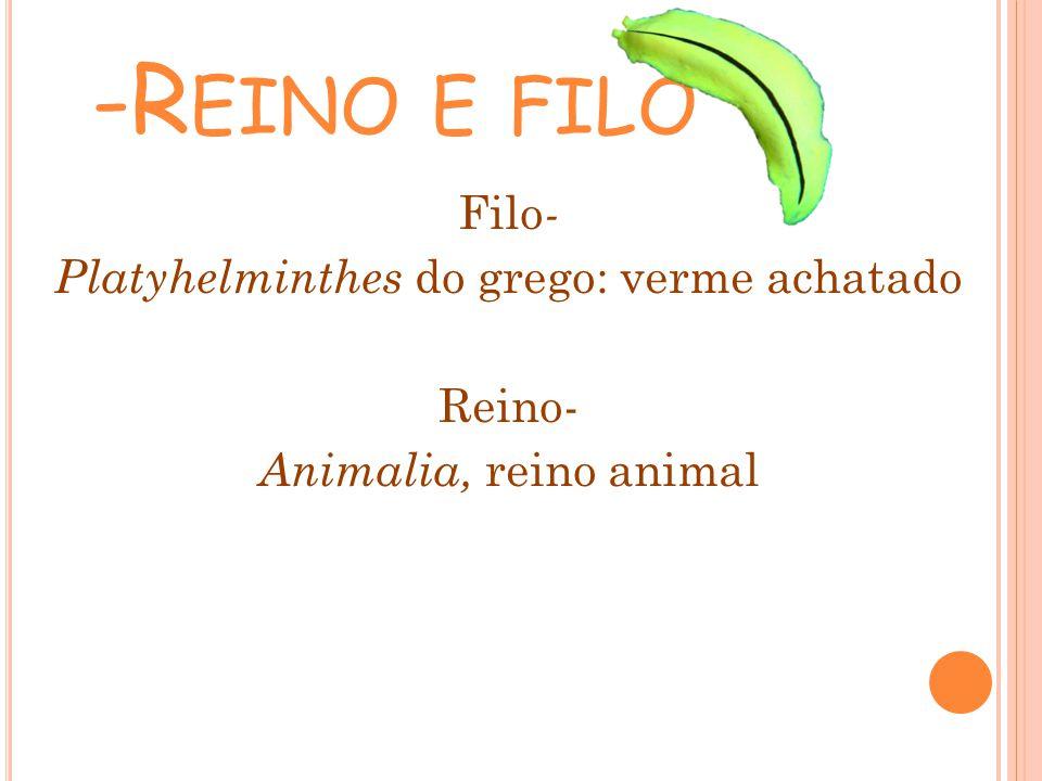 Filo - Platyhelminthes do grego: verme achatado Reino- Animalia, reino animal -R EINO E FILO