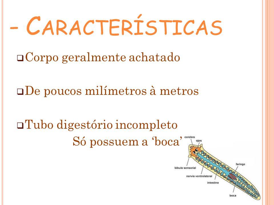 - C ARACTERÍSTICAS Corpo geralmente achatado De poucos milímetros à metros Tubo digestório incompleto Só possuem a boca