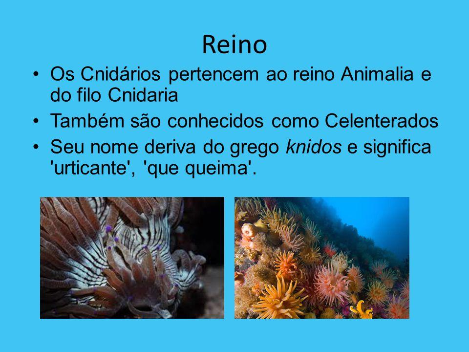 Características e modo de vida Uma das características mais marcantes é a presença de cnidócitos Apresentam duas formas distintas: medusas e pólipos Os cnidários são aquáticos Possuem tecidos verdadeiros
