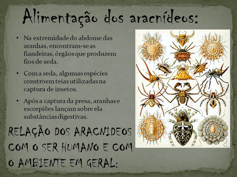 Na extremidade do abdome das aranhas, encontram-se as fiandeiras, órgãos que produzem fios de seda.