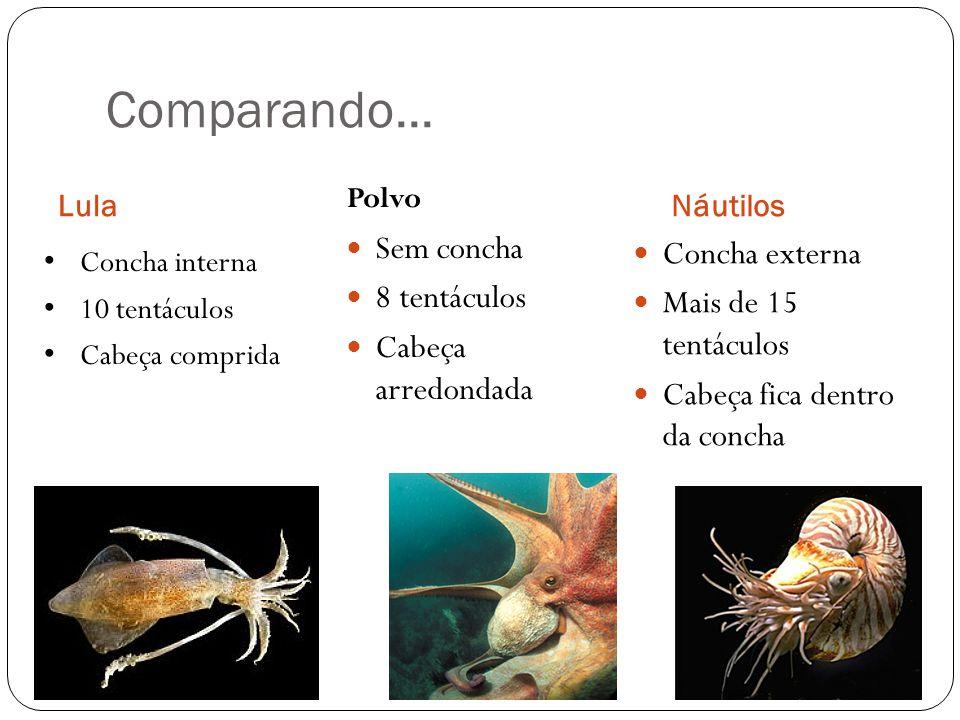 Comparando... LulaNáutilos Sem concha 8 tentáculos Cabeça arredondada Concha externa Mais de 15 tentáculos Cabeça fica dentro da concha Polvo Concha i