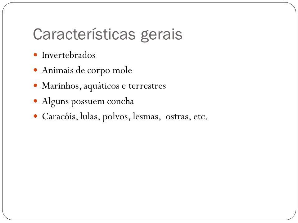 Características gerais Invertebrados Animais de corpo mole Marinhos, aquáticos e terrestres Alguns possuem concha Caracóis, lulas, polvos, lesmas, ost