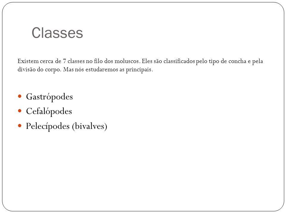 Classes Gastrópodes Cefalópodes Pelecípodes (bivalves) Existem cerca de 7 classes no filo dos moluscos. Eles são classificados pelo tipo de concha e p