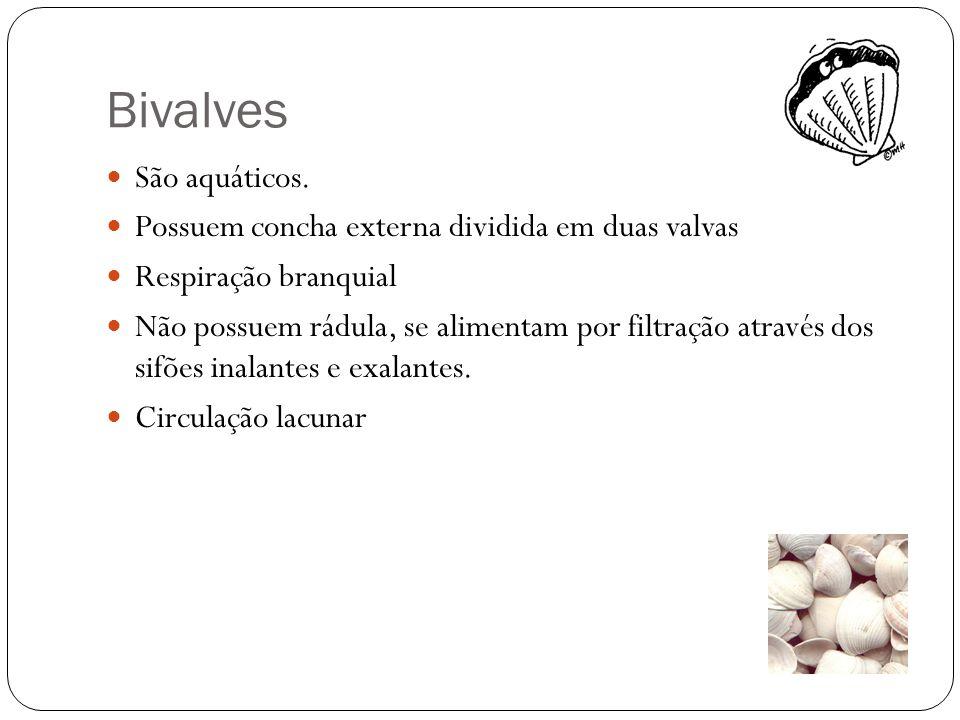 Bivalves São aquáticos. Possuem concha externa dividida em duas valvas Respiração branquial Não possuem rádula, se alimentam por filtração através dos