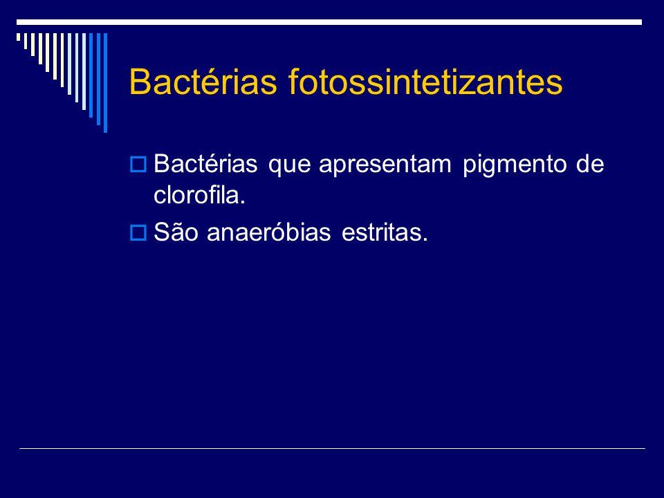 Bactérias fotossintetizantes Bactérias que apresentam pigmento de clorofila. São anaeróbias estritas.