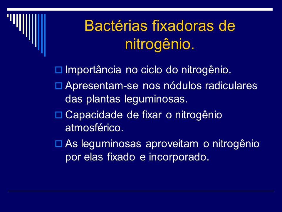 Bactérias fixadoras de nitrogênio. Importância no ciclo do nitrogênio. Apresentam-se nos nódulos radiculares das plantas leguminosas. Capacidade de fi