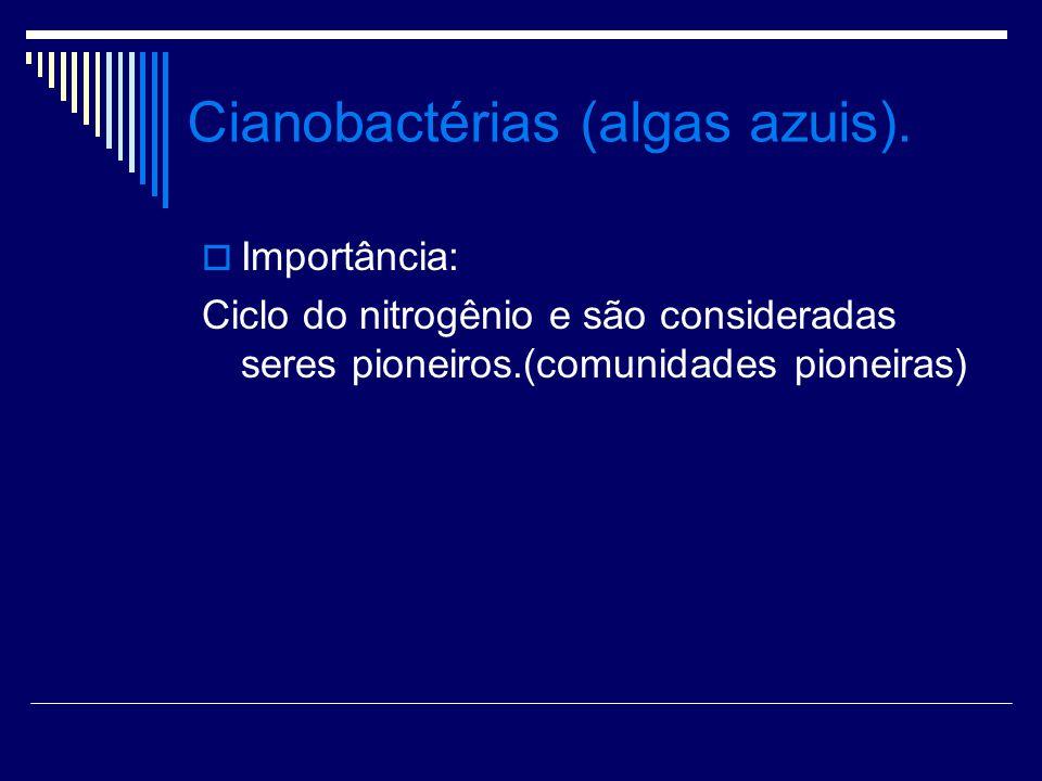 Cianobactérias (algas azuis). Importância: Ciclo do nitrogênio e são consideradas seres pioneiros.(comunidades pioneiras)