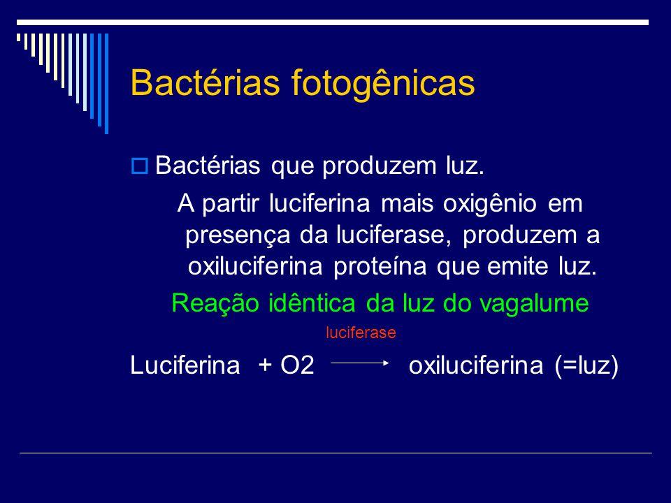 Bactérias fotogênicas Bactérias que produzem luz. A partir luciferina mais oxigênio em presença da luciferase, produzem a oxiluciferina proteína que e