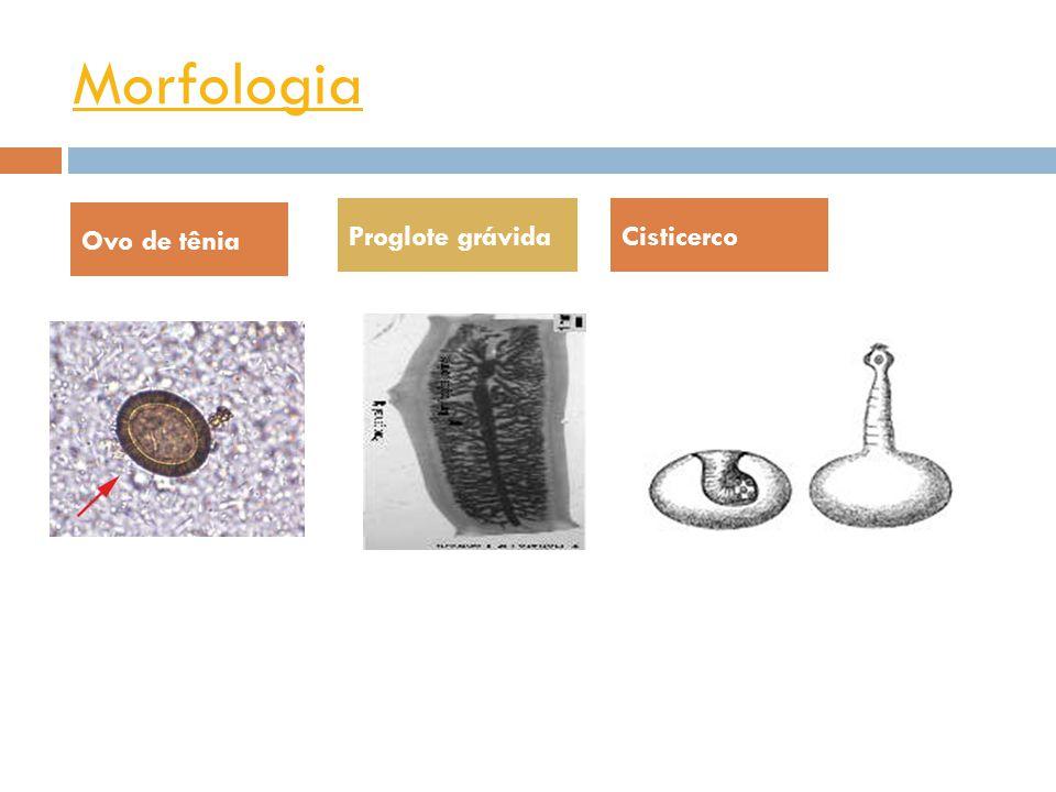 Morfologia Taenia soliumTaenia saginata