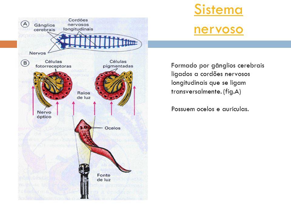 SistemaSistema nervoso Ocelos Estrutura capaz de perceber a luz.