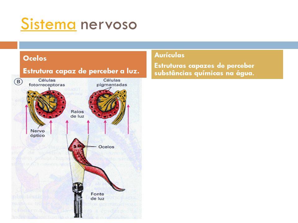 Sistema digestório Sistema digestório incompleto.