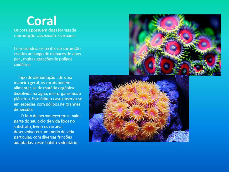Coral Os corais possuem duas formas de reprodução: assexuada e sexuada. Curiosidades: os recifes de corais são criados ao longo de milhares de anos po