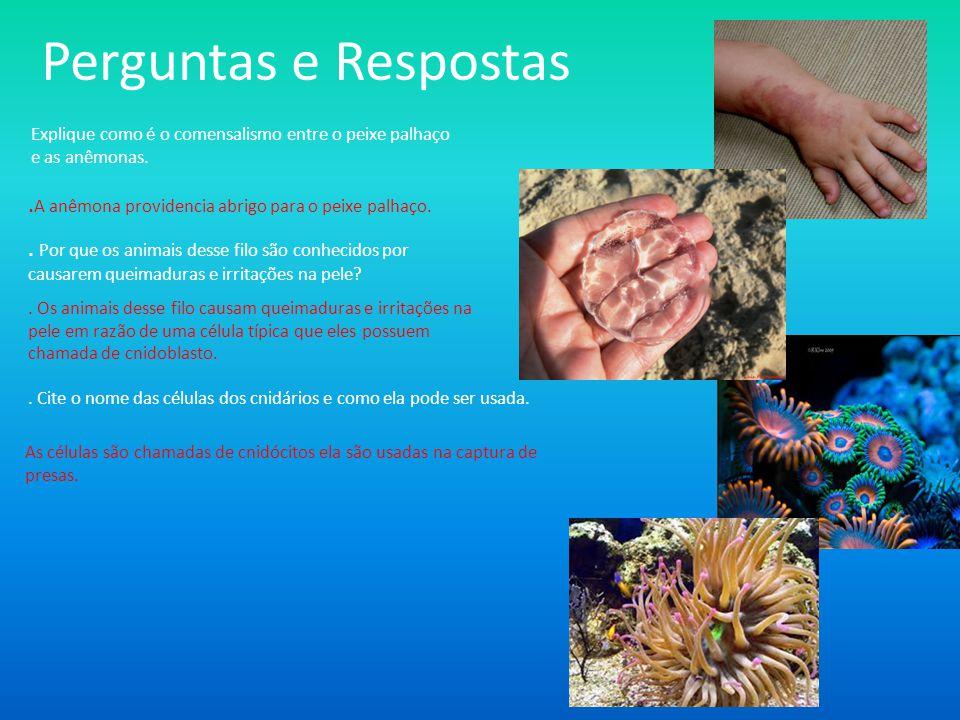 http://www.sobiologia.com.br/conteudos/Rein os2/cnidario.phphttp://www.sobiologia.com.br/conteudos/Rein os2/cnidario.php (04/08/2013) http://www.infoescola.com/animais/sistema- reprodutivo-dos-cnidarios/http://www.infoescola.com/animais/sistema- reprodutivo-dos-cnidarios/ (04/08/2013) http://cnidarios2007.blogspot.com.br/20 07_09_01_archive.htmlhttp://cnidarios2007.blogspot.com.br/20 07_09_01_archive.html (05/09/2013) http://www.oceanario.pt/cms/1297/ http://www.oceanario.pt/cms/1297/ (05/09/13) www.slideshare.netwww.slideshare.net (01/09/2013 e 10/09/2013) AGUILAR, João B.