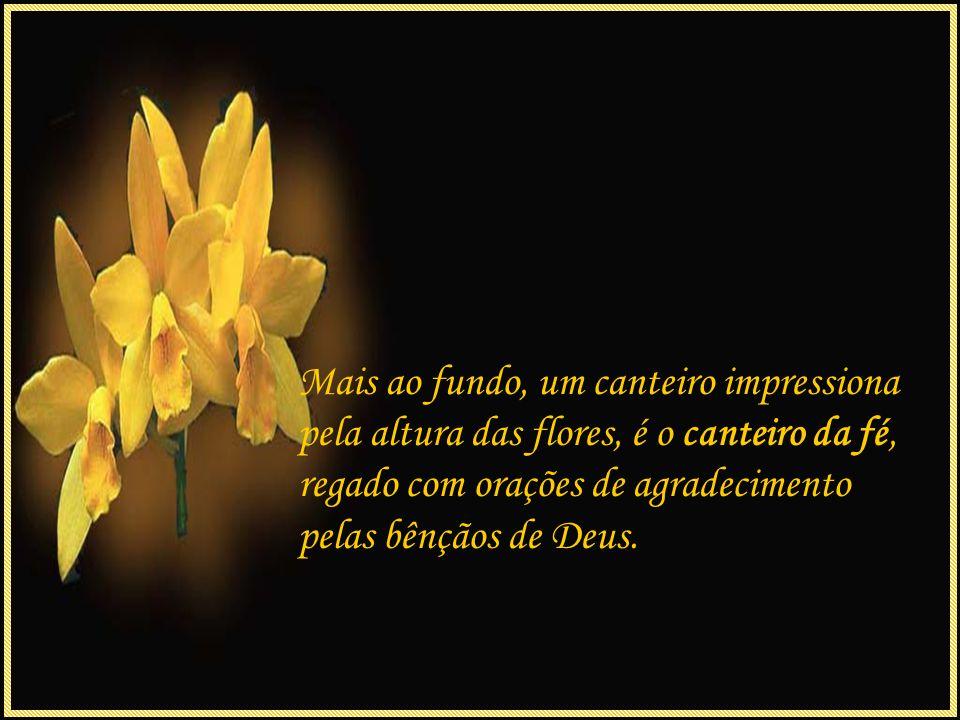 No canteiro da alegria, flores lindas que sorriem para a vida, são conhecidas como