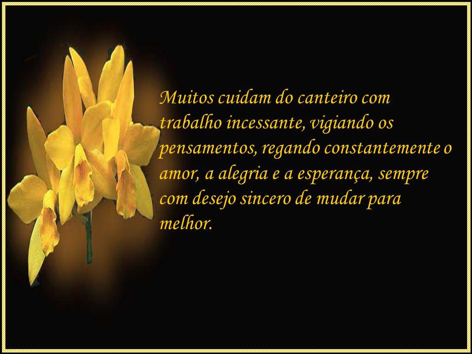 Mais ao fundo, um canteiro impressiona pela altura das flores, é o canteiro da fé, regado com orações de agradecimento pelas bênçãos de Deus.