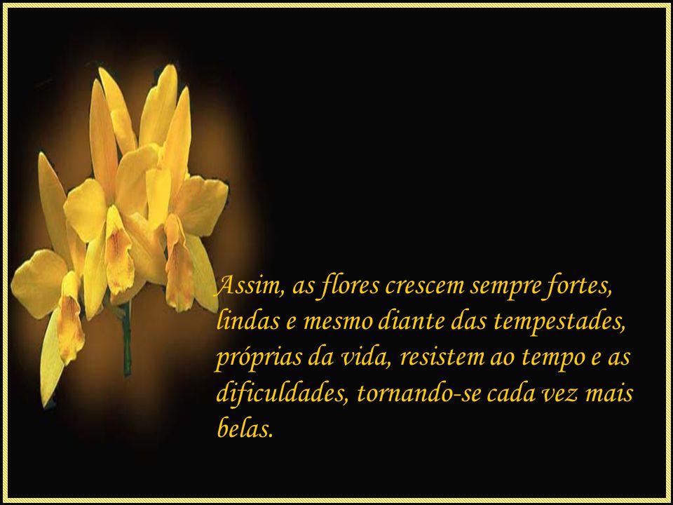 Assim, as flores crescem sempre fortes, lindas e mesmo diante das tempestades, próprias da vida, resistem ao tempo e as dificuldades, tornando-se cada vez mais belas.