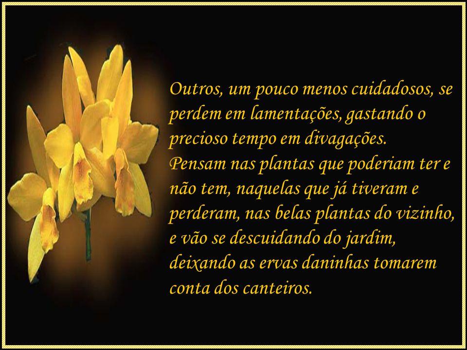 Assim, as flores crescem sempre fortes, lindas e mesmo diante das tempestades, próprias da vida, resistem ao tempo e as dificuldades, tornando-se cada