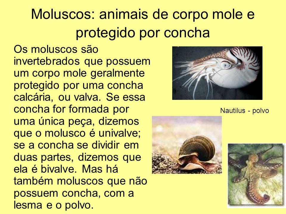 Moluscos: animais de corpo mole e protegido por concha Os moluscos são invertebrados que possuem um corpo mole geralmente protegido por uma concha cal