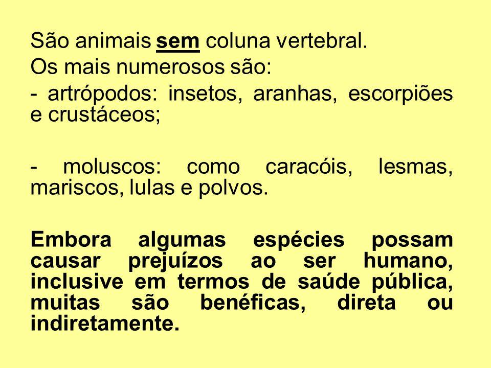 São animais sem coluna vertebral. Os mais numerosos são: - artrópodos: insetos, aranhas, escorpiões e crustáceos; - moluscos: como caracóis, lesmas, m