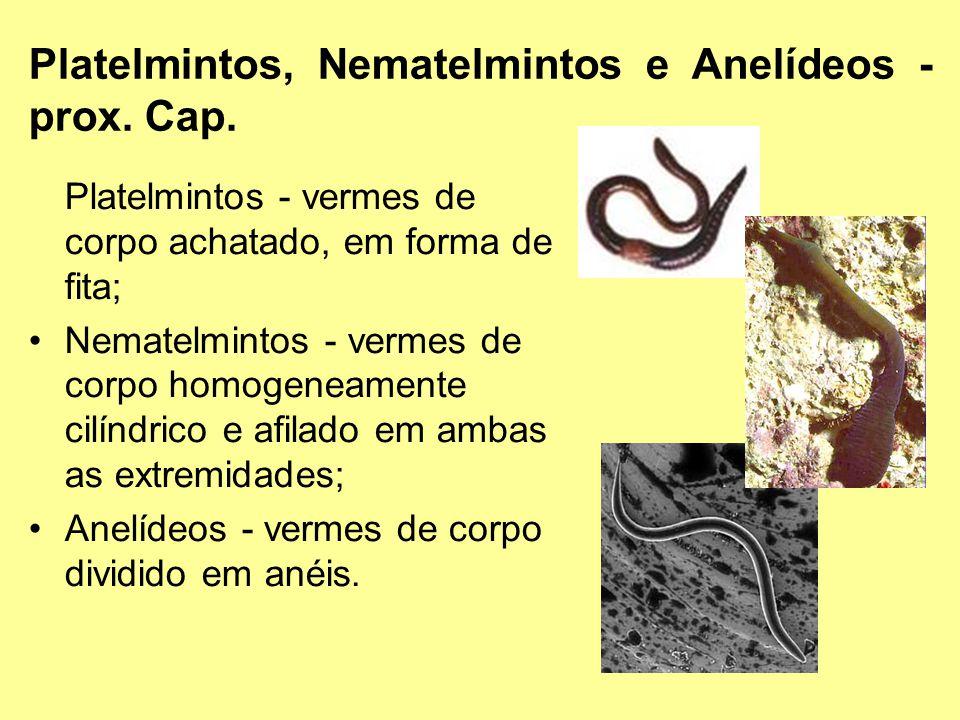 Platelmintos, Nematelmintos e Anelídeos - prox. Cap. Platelmintos - vermes de corpo achatado, em forma de fita; Nematelmintos - vermes de corpo homoge