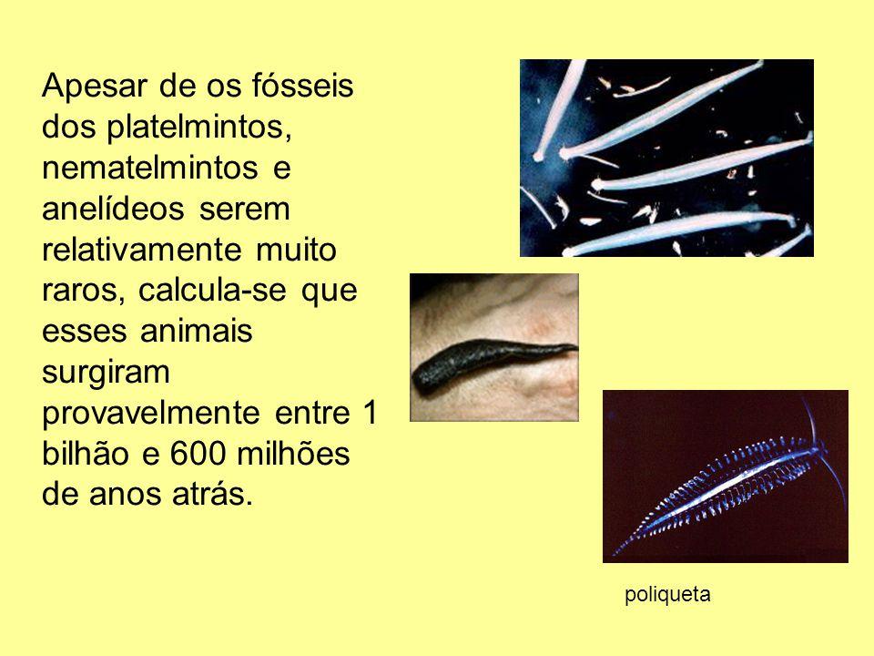 Apesar de os fósseis dos platelmintos, nematelmintos e anelídeos serem relativamente muito raros, calcula-se que esses animais surgiram provavelmente