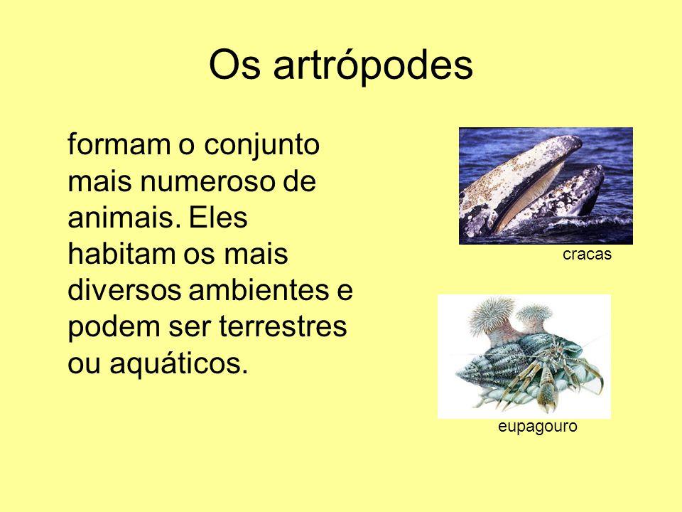 Os artrópodes formam o conjunto mais numeroso de animais. Eles habitam os mais diversos ambientes e podem ser terrestres ou aquáticos. cracas eupagour