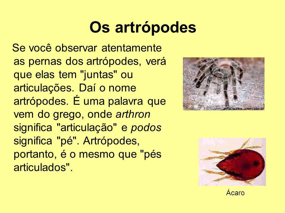 Os artrópodes Se você observar atentamente as pernas dos artrópodes, verá que elas tem