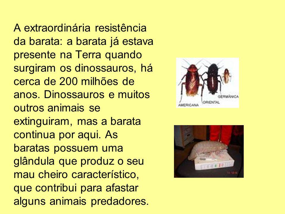 A extraordinária resistência da barata: a barata já estava presente na Terra quando surgiram os dinossauros, há cerca de 200 milhões de anos. Dinossau