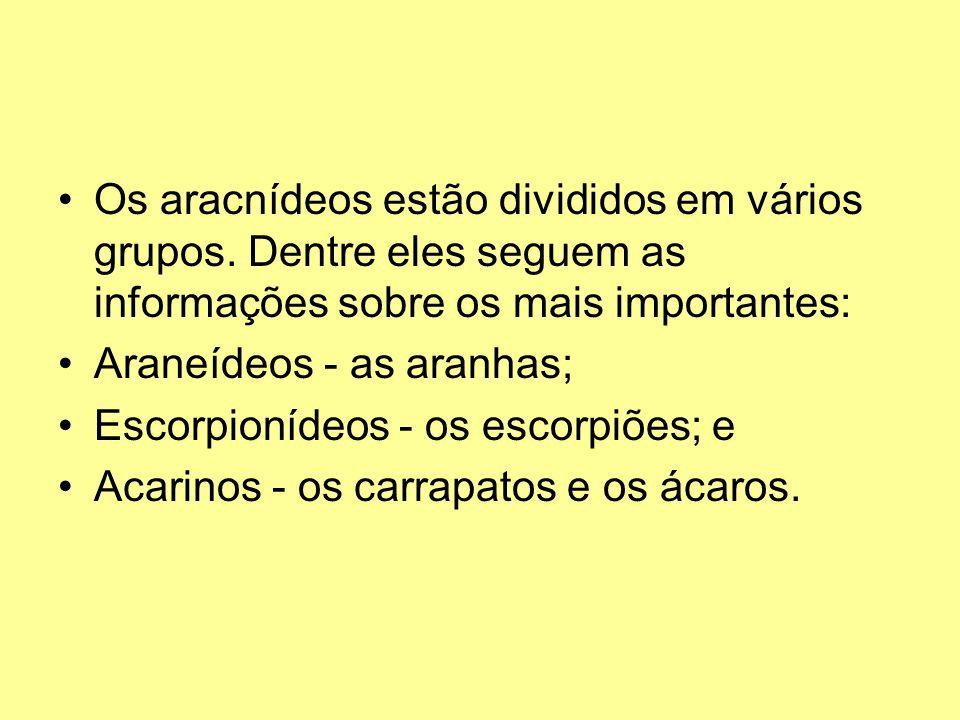Os aracnídeos estão divididos em vários grupos. Dentre eles seguem as informações sobre os mais importantes: Araneídeos - as aranhas; Escorpionídeos -
