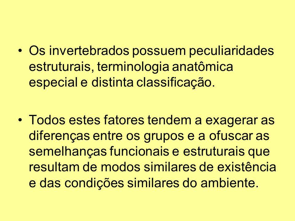 Os invertebrados possuem peculiaridades estruturais, terminologia anatômica especial e distinta classificação. Todos estes fatores tendem a exagerar a