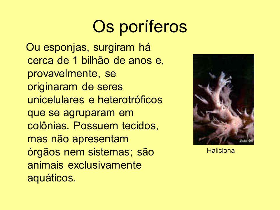 Os poríferos Ou esponjas, surgiram há cerca de 1 bilhão de anos e, provavelmente, se originaram de seres unicelulares e heterotróficos que se agrupara