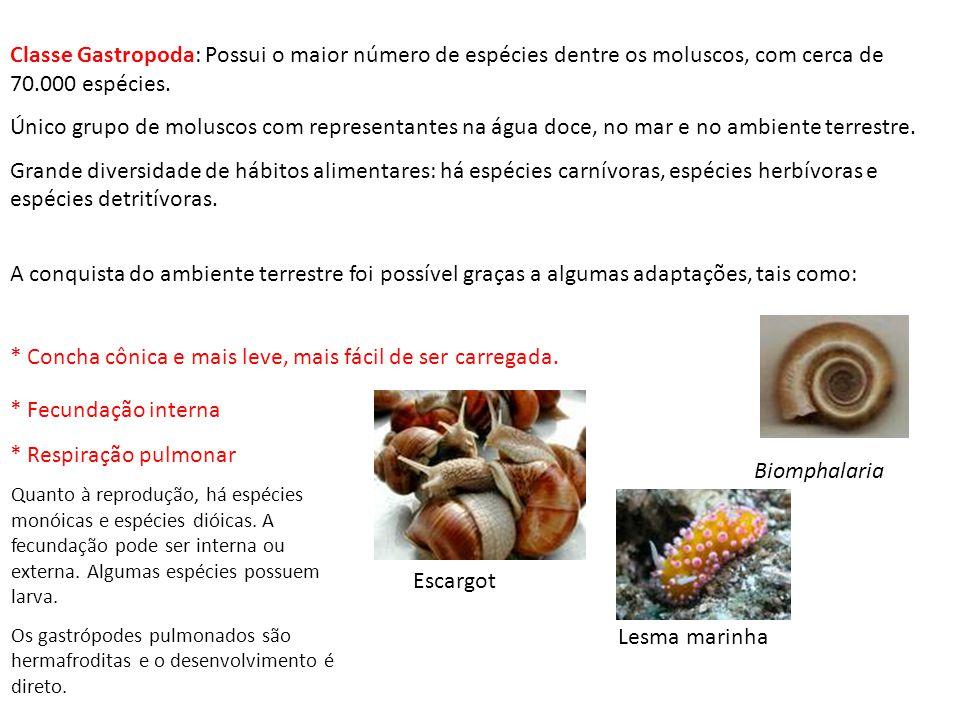 MORFOLOGIA DE UM MOLUSCO Apesar da grande variedade de formas, os moluscos apresentam um padrão básico de organização corporal. O corpo dos moluscos e