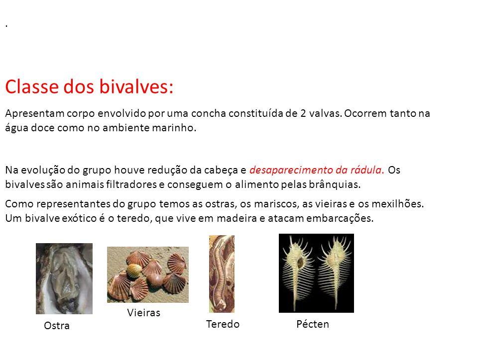 IMPORTÂNCIA DOS MOLUSCOS Integrantes de um grande número de cadeias alimentares; Muitos bivalves atuam como bioindicadores, pois são capazes de concen