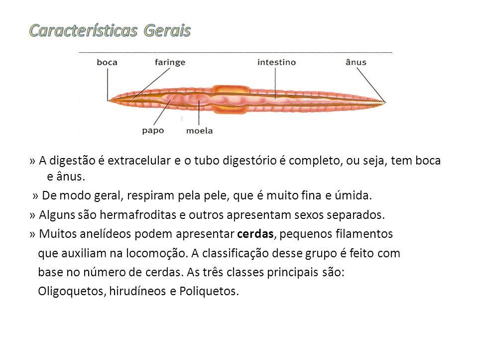 » A digestão é extracelular e o tubo digestório é completo, ou seja, tem boca e ânus.