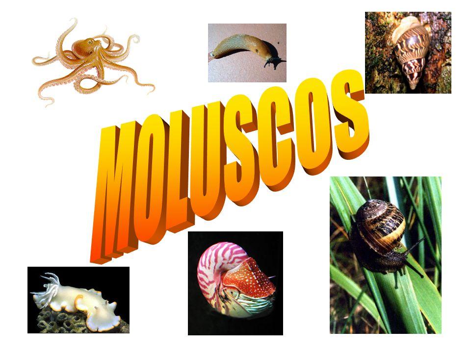 » A classe dos Poliquetas são anelídeos marinhos que possuem corpo com muitas cerda. » Apresentam espécies de vida livre, como os nereis e espécies sé