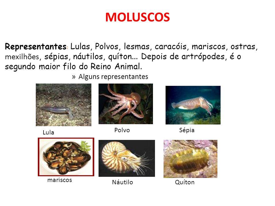 MOLUSCOS » Alguns representantes Representantes : Lulas, Polvos, lesmas, caracóis, mariscos, ostras, mexilhões, sépias, náutilos, quíton...