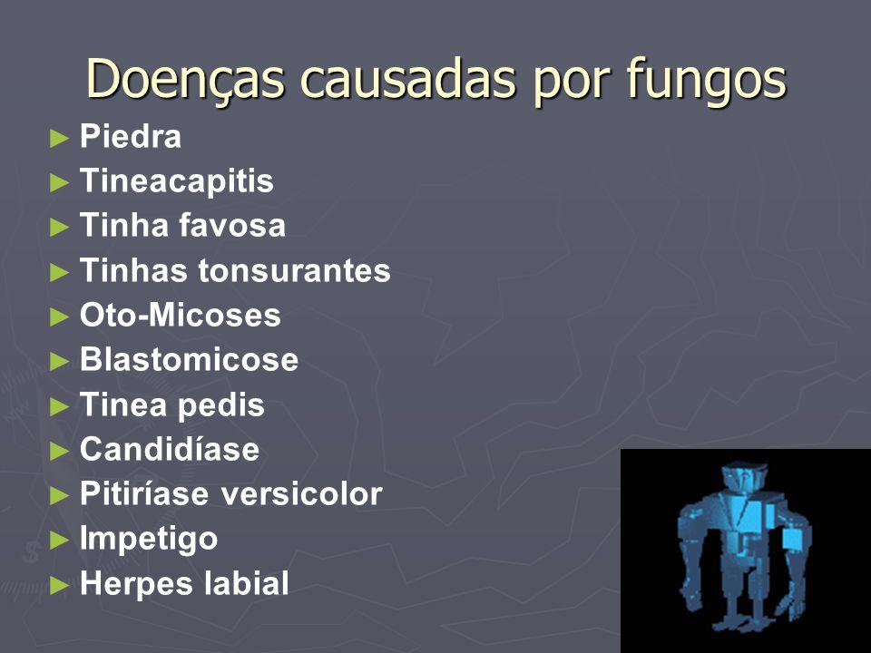 Doenças causadas por fungos Piedra Tineacapitis Tinha favosa Tinhas tonsurantes Oto-Micoses Blastomicose Tinea pedis Candidíase Pitiríase versicolor I