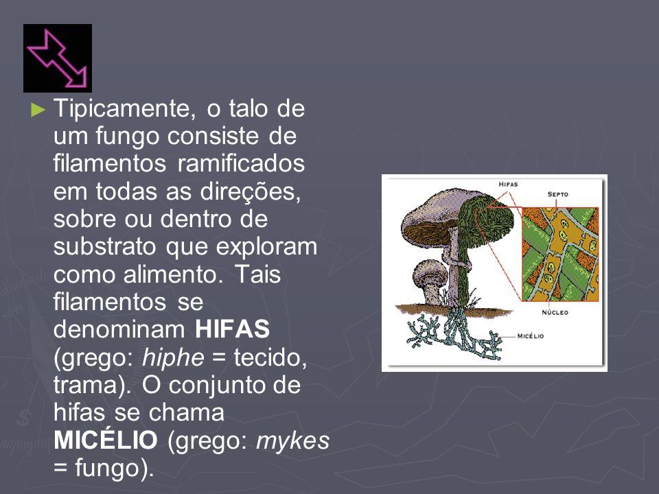 Tipicamente, o talo de um fungo consiste de filamentos ramificados em todas as direções, sobre ou dentro de substrato que exploram como alimento. Tais