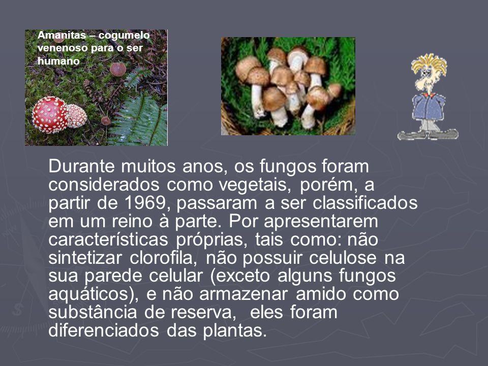 Durante muitos anos, os fungos foram considerados como vegetais, porém, a partir de 1969, passaram a ser classificados em um reino à parte. Por aprese