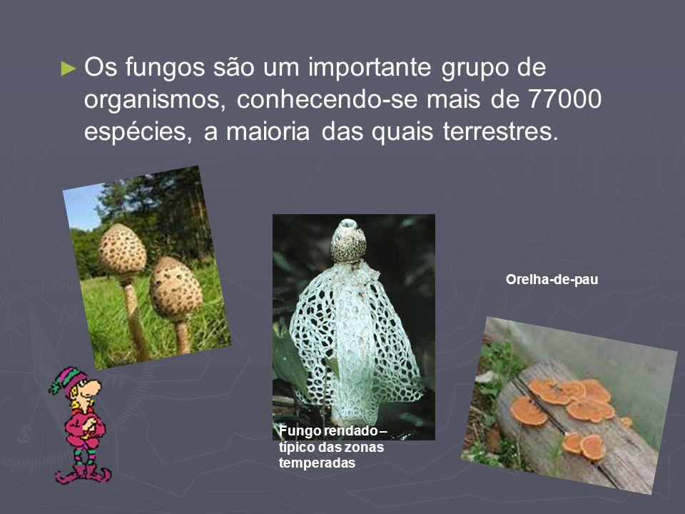 Os fungos são um importante grupo de organismos, conhecendo-se mais de 77000 espécies, a maioria das quais terrestres. Fungo rendado – típico das zona