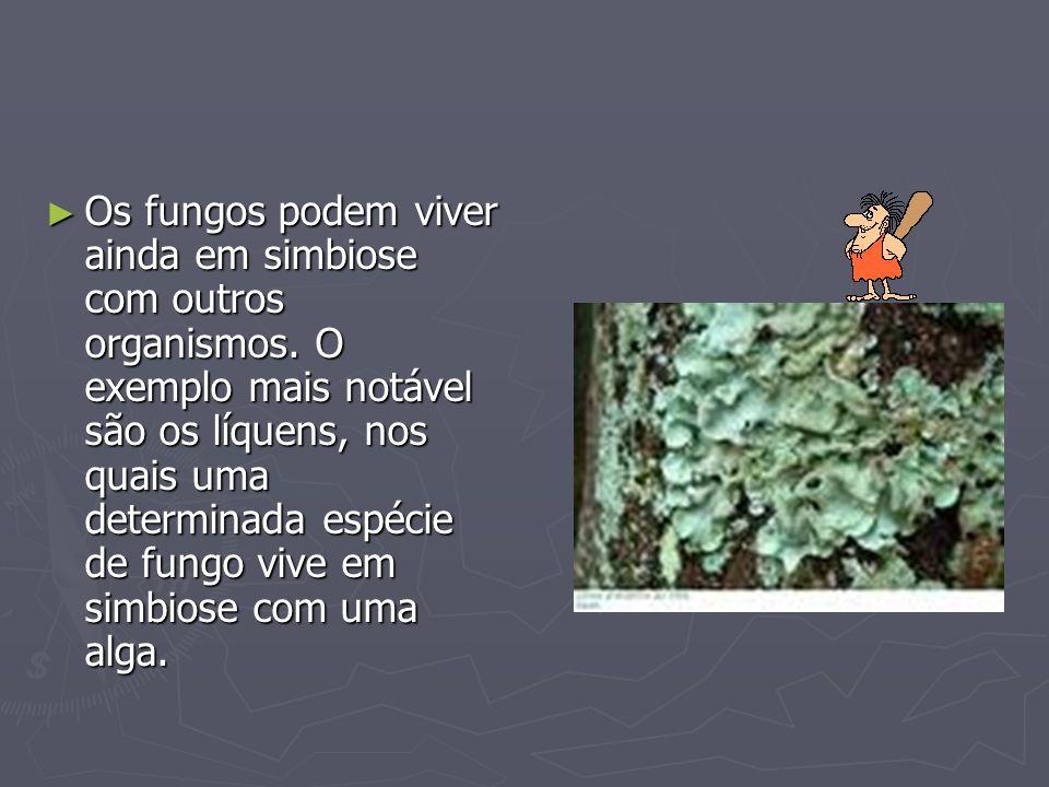 Os fungos podem viver ainda em simbiose com outros organismos. O exemplo mais notável são os líquens, nos quais uma determinada espécie de fungo vive