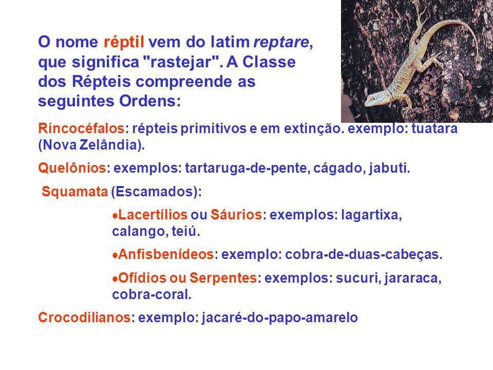O nome réptil vem do latim reptare, que significa rastejar .
