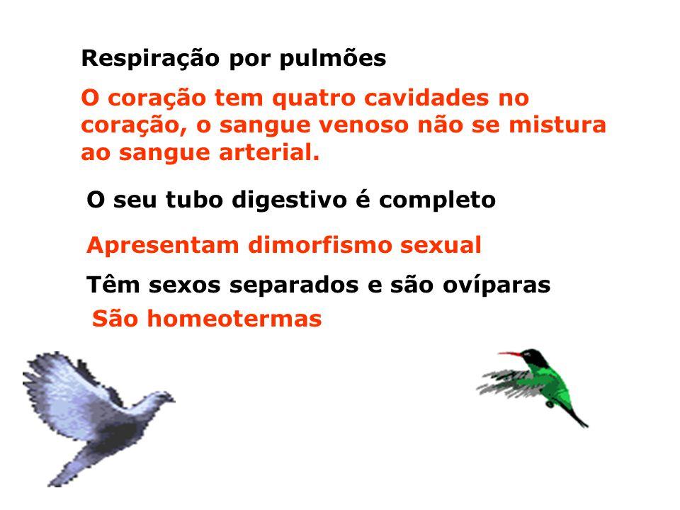 Características gerais das aves: Têm o corpo coberto por penas, que protegem o corpo da perda de calor e auxiliam o vôo A boca é um bico, sem dentes q